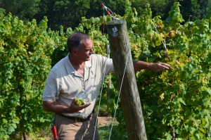 Bernie, the vineyard manager, teaching the group about the grapes.