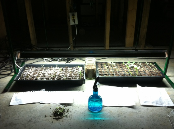 Our Grow Lamp, starter kits and spray bottle in 2013.  Label sheets are on the floor in front of the kits.