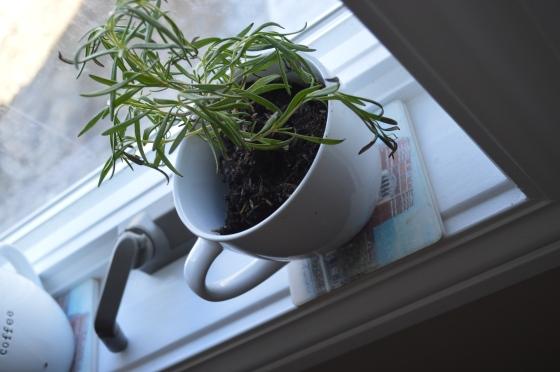 BMOC, Herbs-2